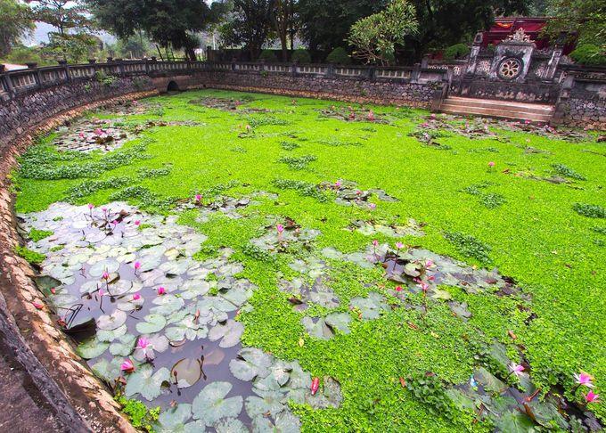半月の美しい池に咲く花に心奪われて