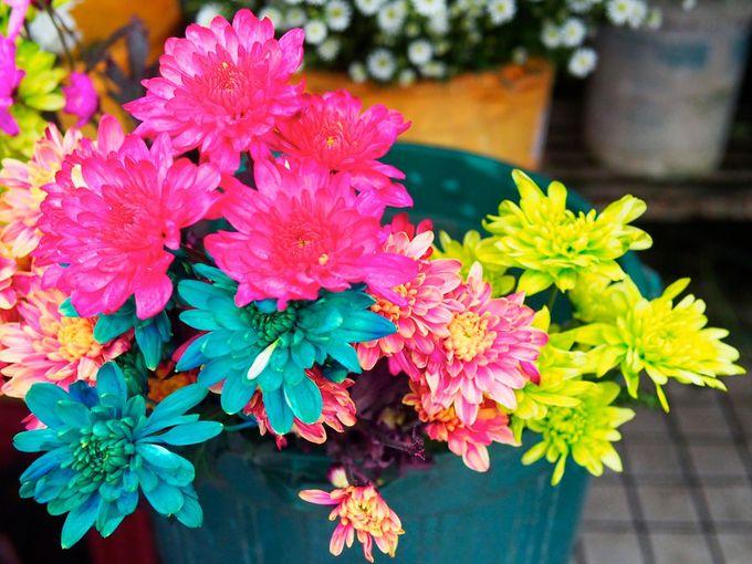 美しい花が街を彩る「リトル・インディア」