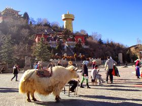 地上の楽園「シャングリラ」チベット文化が香る旧市街を訪ねて