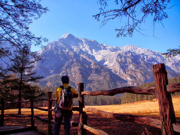 「雲杉坪」の原始林に囲まれて、霊峰玉龍雪山を見上げる