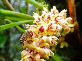 咲き揃うランに温泉!キナバル山周辺でマレーシアの世界遺産を味わおう!