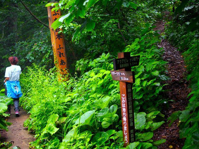 多彩なルートが整備されている白神山地の森の路