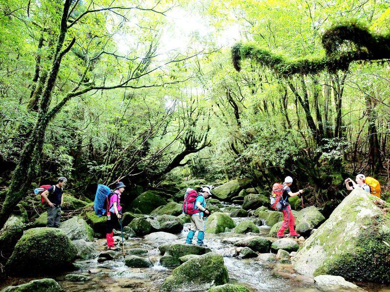 類稀なる美しさ!世界自然遺産「屋久島」の自然美トレッキング