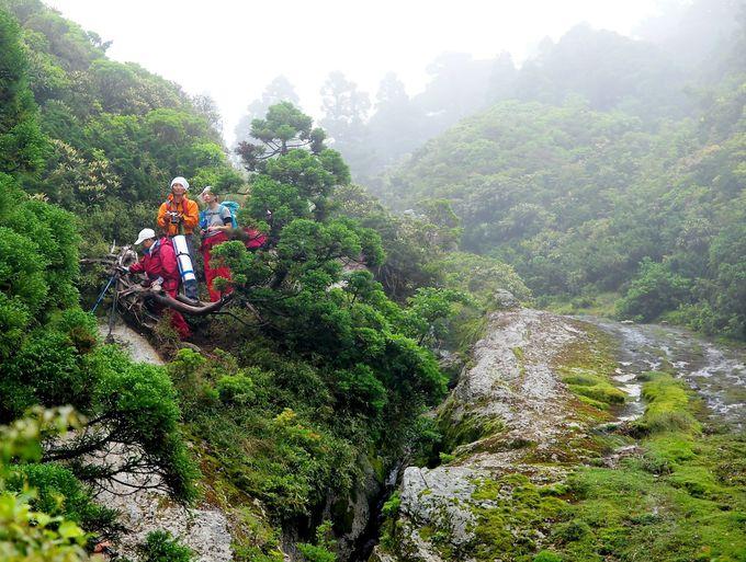 苛酷な屋久島の環境が森をたくましく、そして美しく成長させる