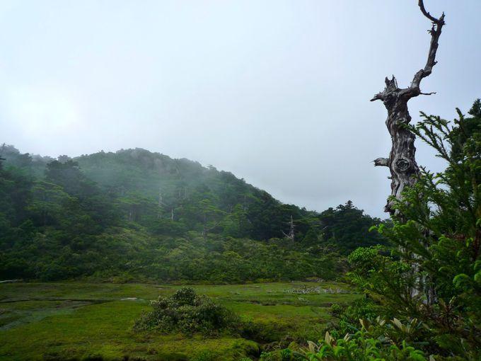 日本最南端の湿原「花之江河」は幽玄の世界