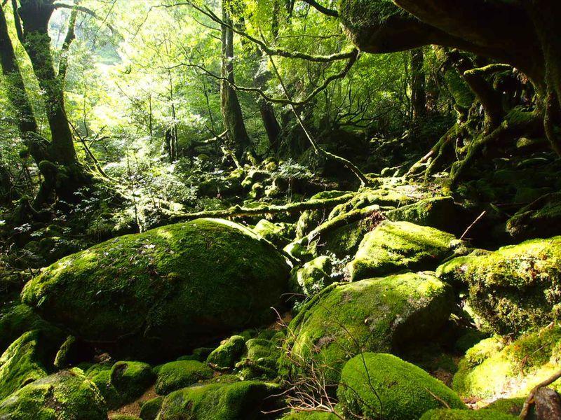 日本百名山「宮之浦岳」トレッキングと自然遺産ハイライト!