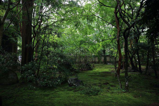 初夏の「青もみじ」は京都の風物詩