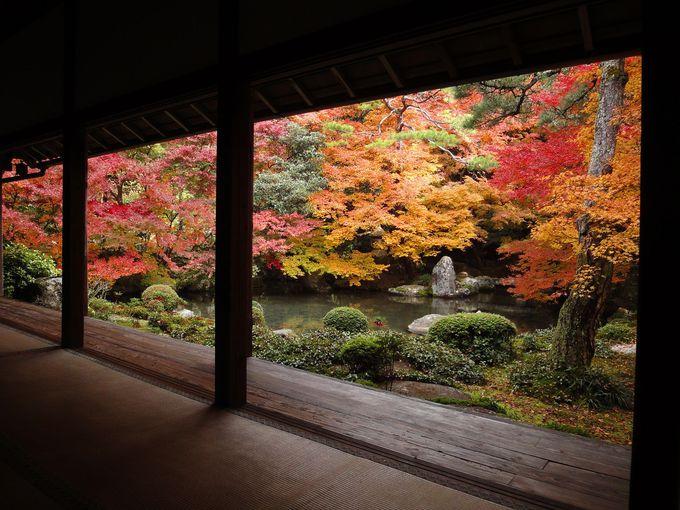 額縁の中の絵画のよう。散り紅葉も美しい「蓮華寺」