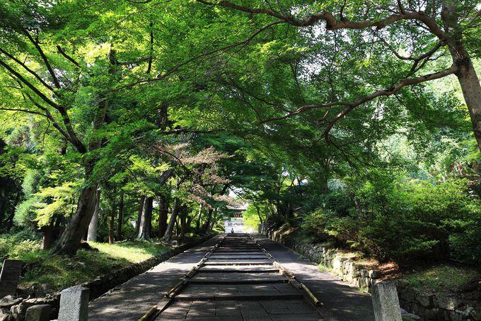 勅使門の前の石段は2011年秋の「そうだ 京都、行こう。」のポスターに