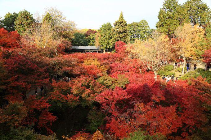 京都最大級の大伽藍をもつ東福寺は禅宗建築の宝庫