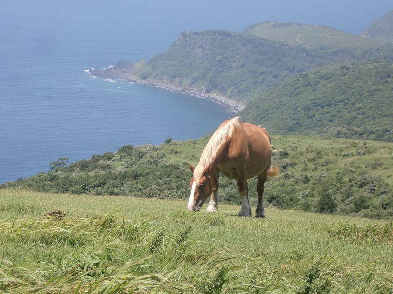日本海の「蒼い絶景」を満喫する隠岐諸島「西ノ島」の海岸めぐり