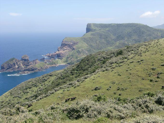 赤尾展望所から見る国賀海岸の摩天崖。
