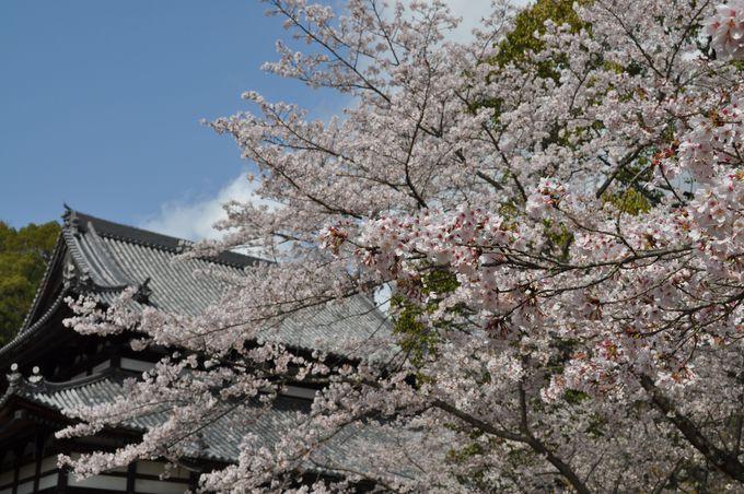 日本の漆器はここから始まった!桜もきれいな「根来寺」