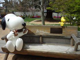 スヌーピーファンの聖地!米サンタローザ「シュルツミュージアム」へ