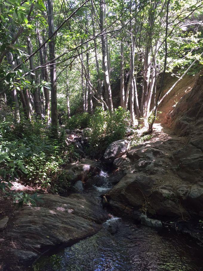 木立の中の清流とエティワンダ滝、深呼吸をしたくなる空間!