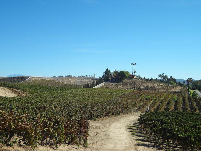 カリフォルニアの新しいワインカントリーから生まれる上質なワイン
