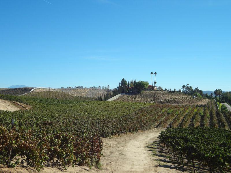 極上ワインバカンス!人気上昇中のカリフォルニア・テメキュラへ
