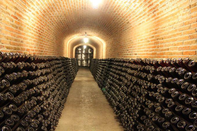 25mの地下洞窟セラー見学&テイスティング