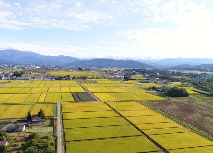 江戸時代から続く日本酒の伝統をワインにも