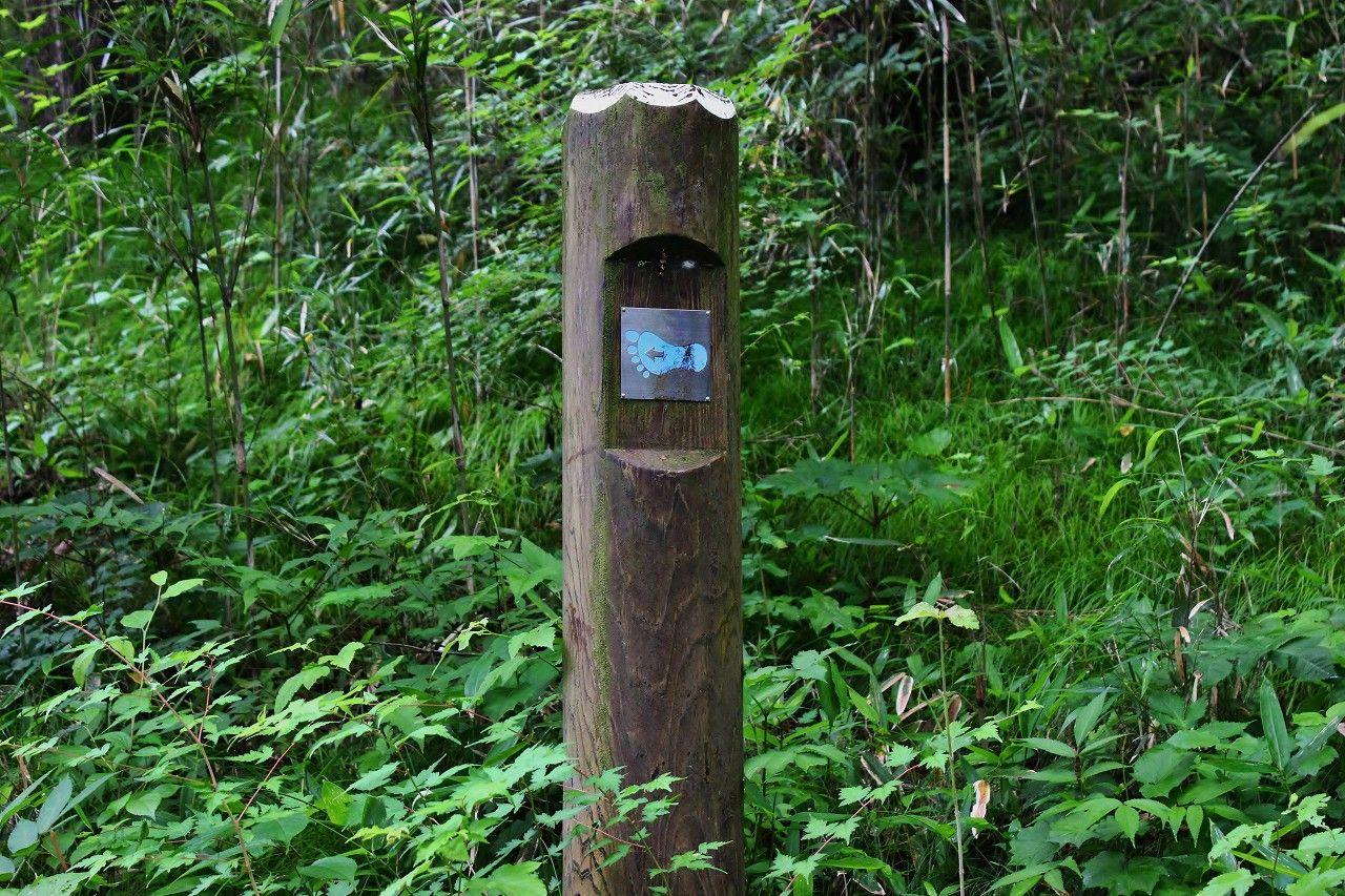 森の中は野鳥の楽園、迷わず歩ける足跡道標で安心です