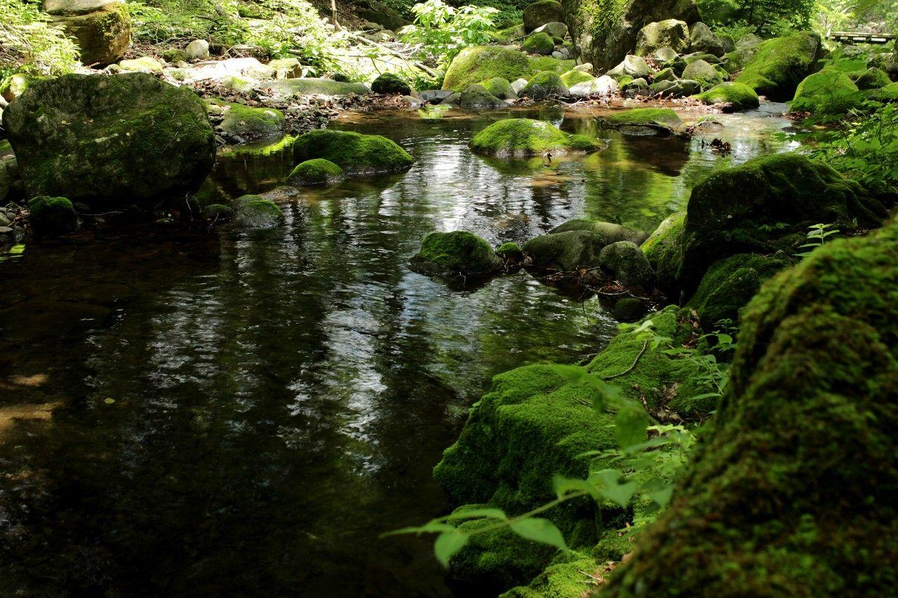 苔むす渓流と滝の水音が心地よい癒しをプレゼントしてくれます