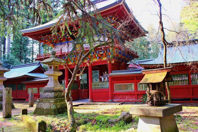 那須与一ゆかりの那須神社「枝垂れ桜」と「エドヒガン」