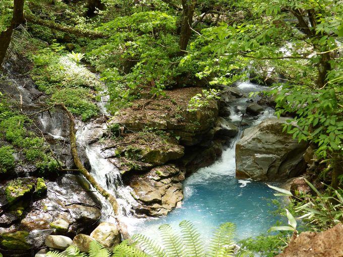 秘境「スッカン沢」神秘の森で滝巡り