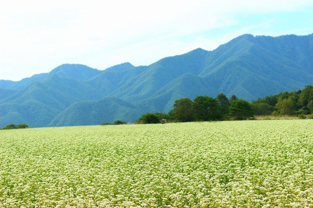 日本一の猿楽台『蕎麦畑』のスケールは超圧巻!
