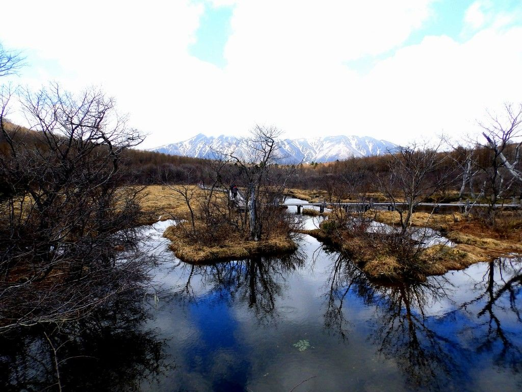 雪の残る、晩春の沼っ原湿原!