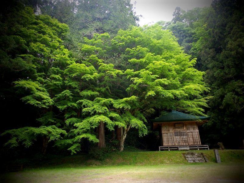 静寂と森のパワーに包まれた、神秘のお堂
