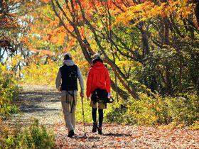 紅葉の『那須平成の森』で癒しのハイキングを満喫しよう!