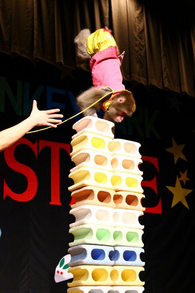 メインは園内の『那須サル劇場』で爆笑のオンステージを!!