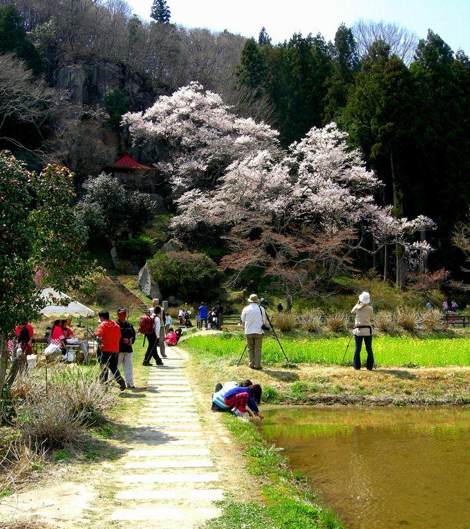 """那須町『堂の下岩観音の桜』は""""松尾芭蕉""""も旅した東山道の名勝地!"""
