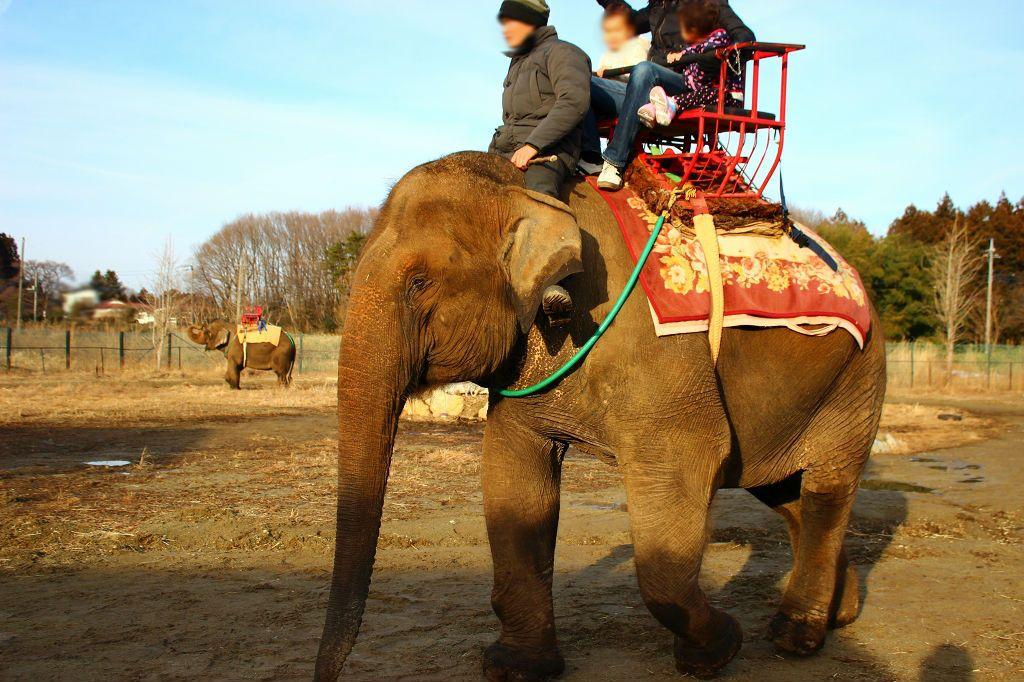 象にも乗れちゃう?「那須ワールドモンキーパーク」
