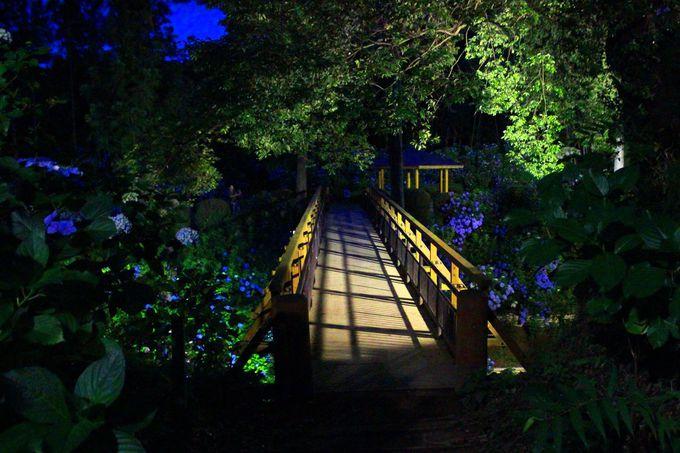 「紫陽花橋」を渡ると、松尾芭蕉の世界へと繋がります。