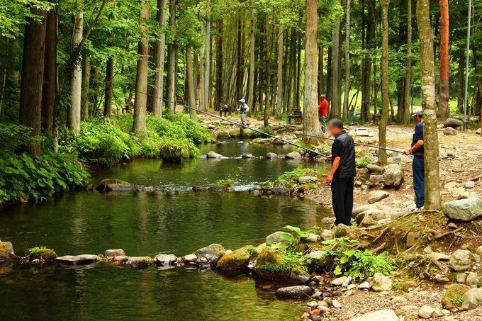 釣りは全くの初心者でも大丈夫、難易度に合わせた釣りが楽しめます。