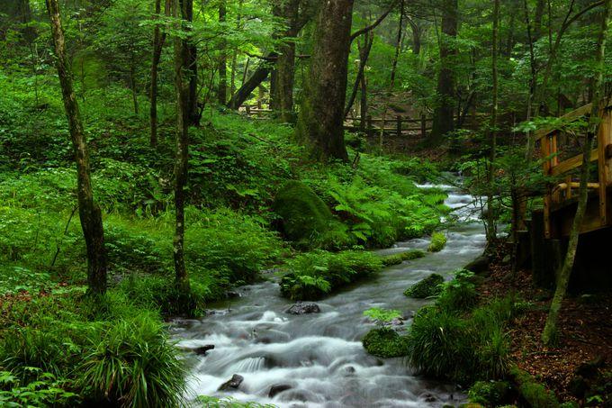 心癒される、湧水の湧き出る迫力と力強さに感動!