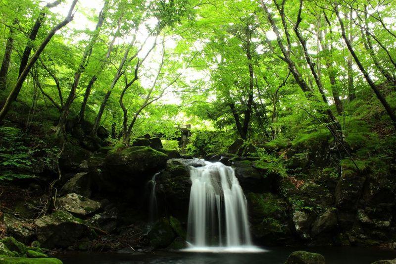 流れる風が気持ち良い栃木「県民の森」で滝と渓流散歩を楽しもう