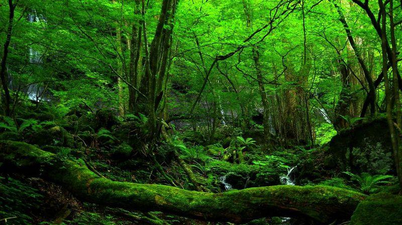 癒されたい方必見「素廉の滝(それんのたき)」の神秘の森はどんな場所