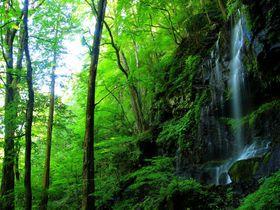 秘境スッカン沢の神秘の森で「素廉の滝」の絶景に癒される!栃木県那須塩原