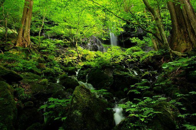 原生林の苔の緑と滝の景色!ここは本当に関東地方の森かと目を疑う光景が広がっています。