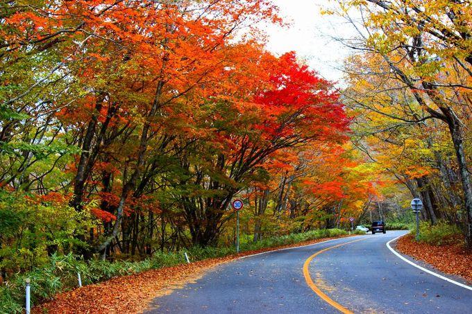 ドライブウエイ全てが真っ赤に染まる紅葉ワールド♪
