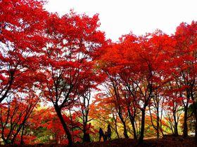 紅葉の名所・塩原温泉!おさえておきたい絶景スポットはここだ