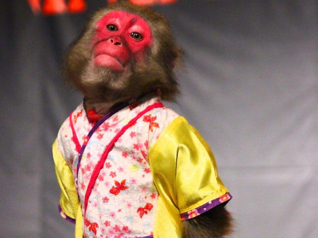 """那須ワールドモンキーパークは猿だけじゃない""""象や大蛇""""もいますよ!"""