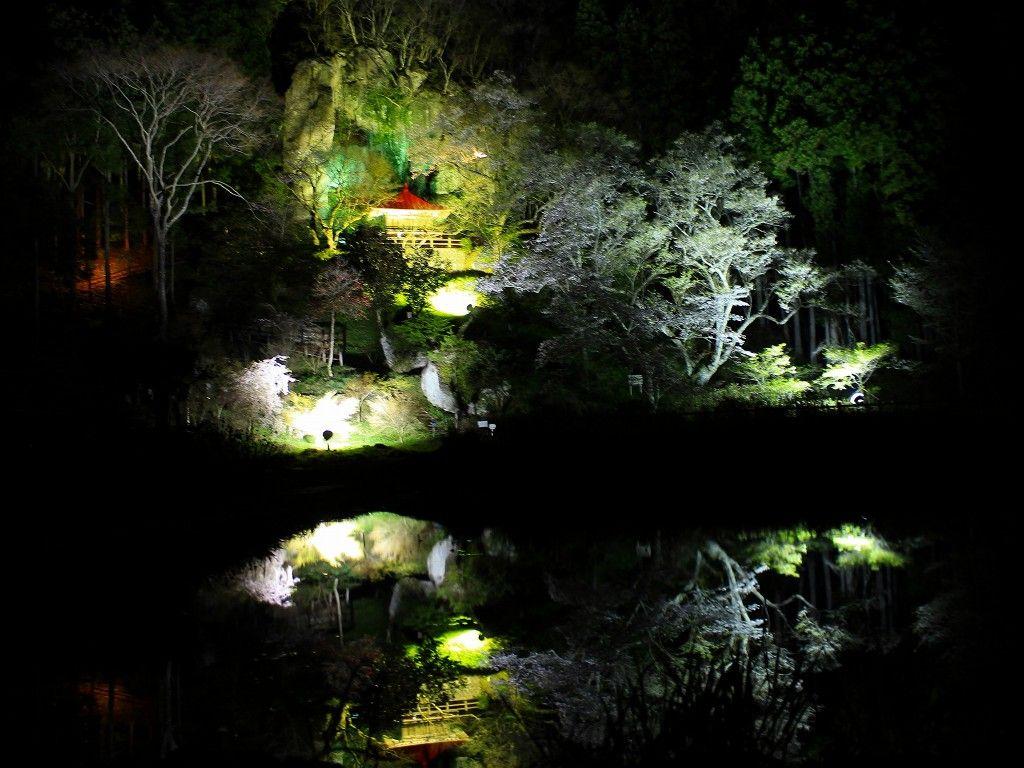 堂の下岩観音の桜はライトアップされた幻想的な夜景がお奨め!