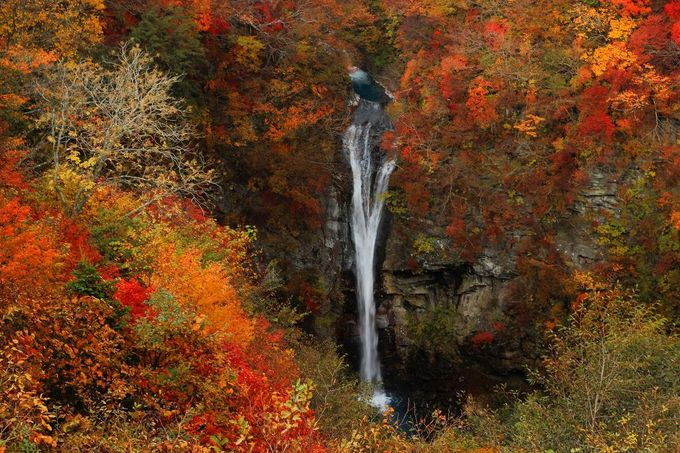 「那須平成の森(旧・那須御用邸地内)」にある「駒止めの滝」は紅葉の秋が一番美しい