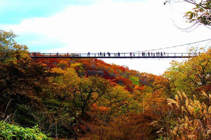 つつじの時期だけじゃない!秋の紅葉シーズンもお勧め「つつじ吊り橋」
