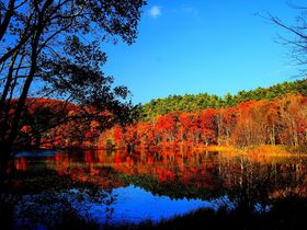 水鏡に映る絶景の紅葉!南会津下郷町「観音沼森林公園」