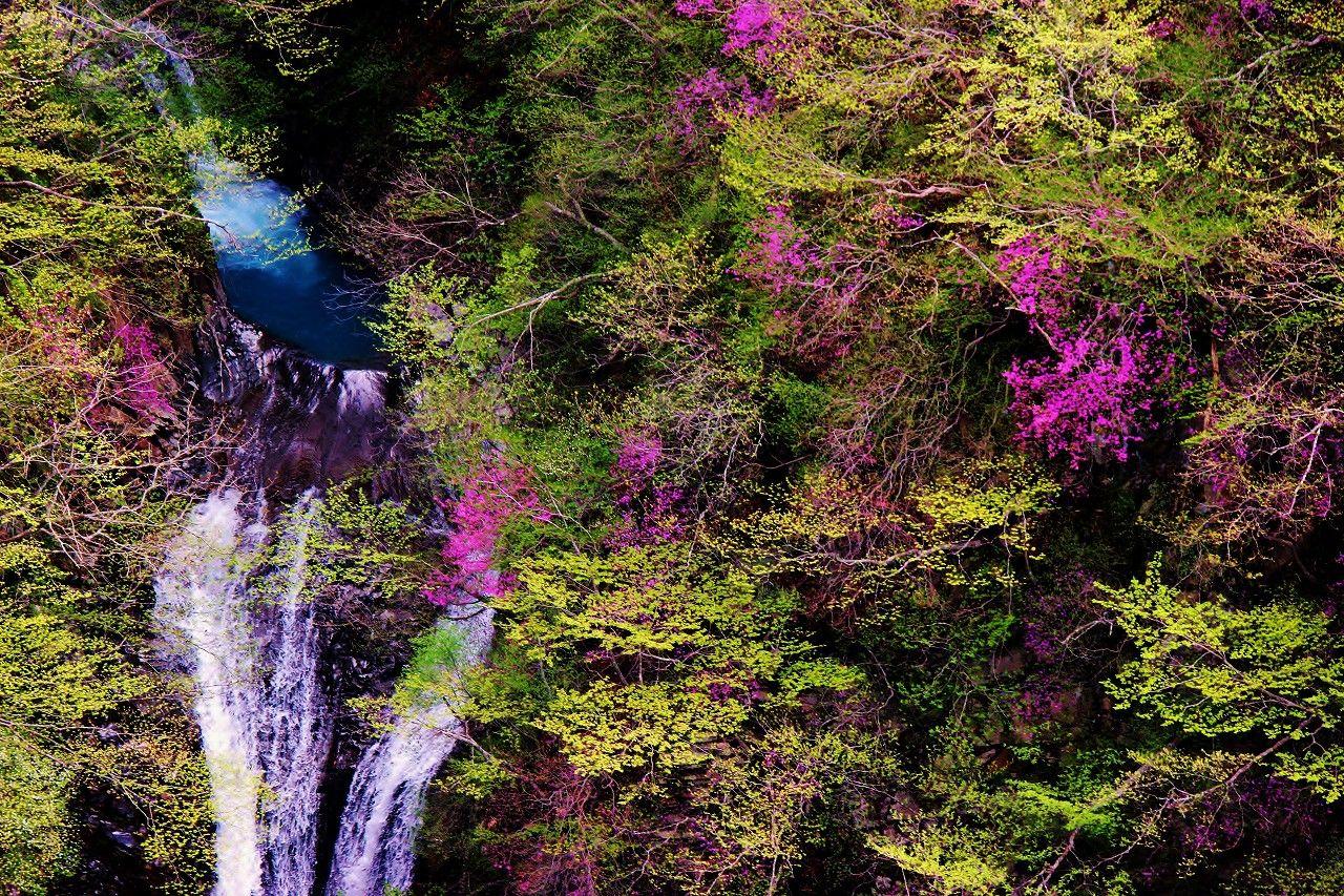 ツツジだけじゃない、近くには滝も秘湯の温泉もあります
