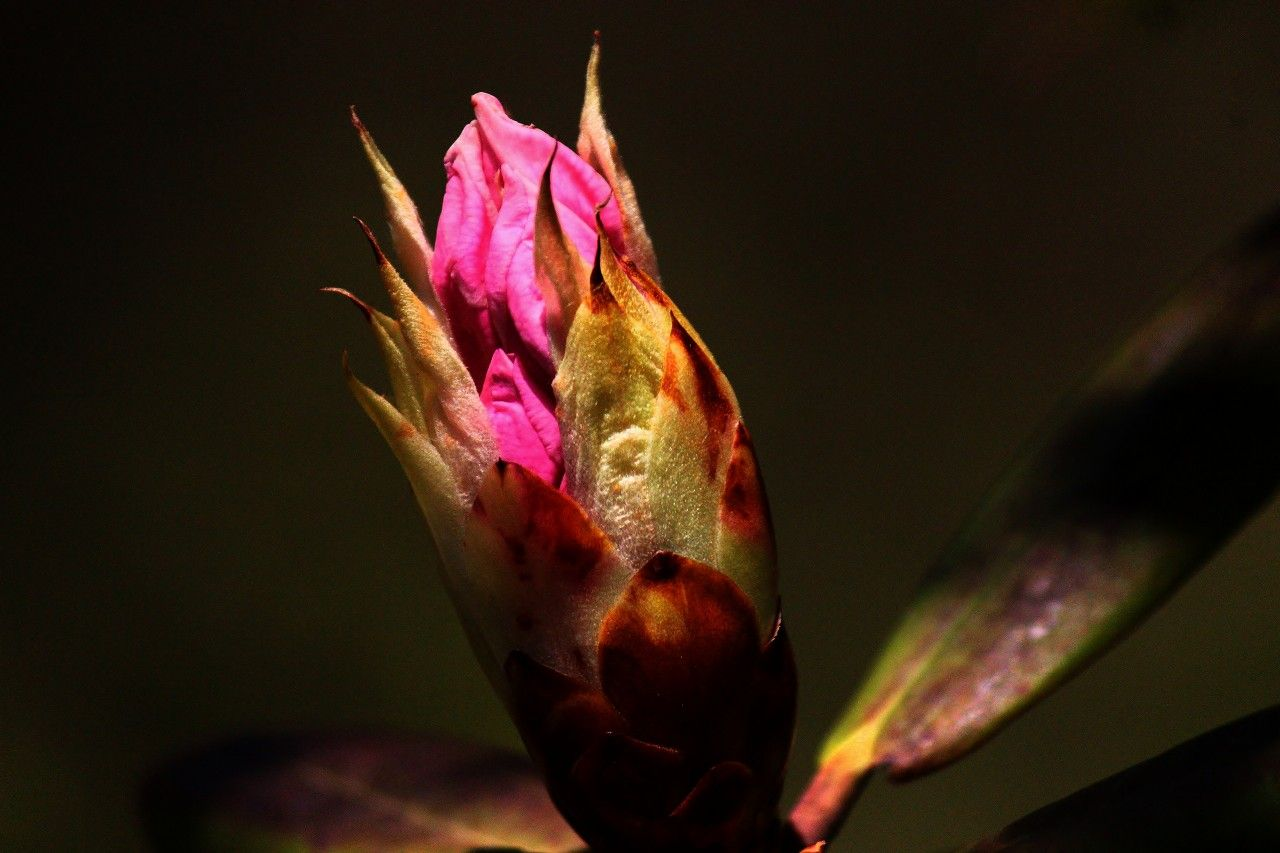 那須高原は春から秋まで種類豊富な季節の草花が楽しめる
